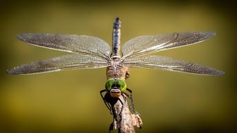 Entomologist Expert 2