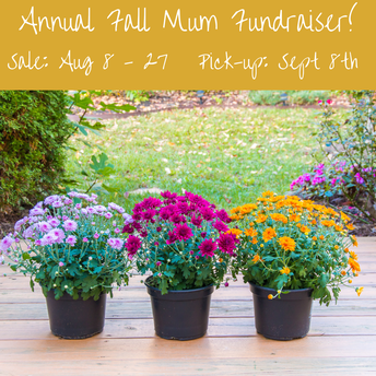 Mums Fundraiser Results are in!