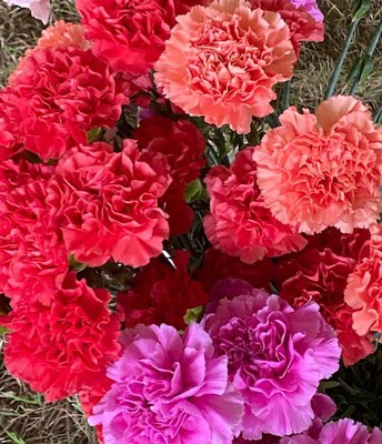 Thank you, PTO, for the carnations!