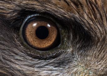 Eagle Eye Recognition