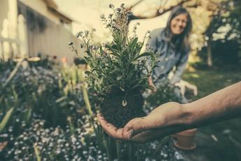 NZMaths - The Garden