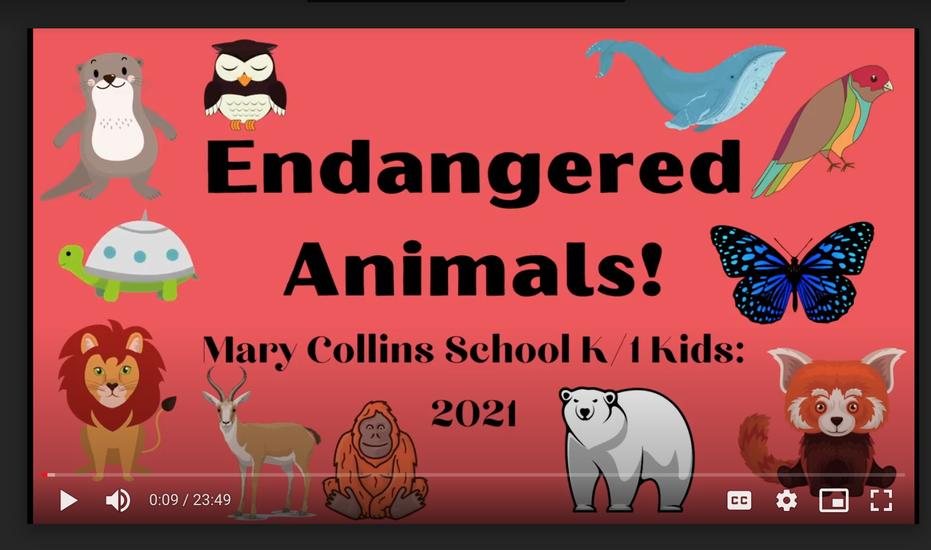 K/1 Endangered Animal Video