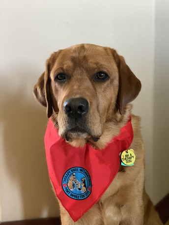 Therapy Dog - Redd - at Wood 2021-22