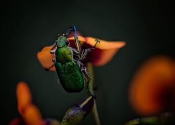 Entomologist Expert