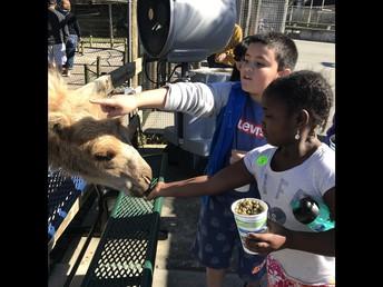 Trip to Richmond Zoo