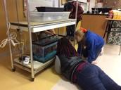 Aquaponics Lab