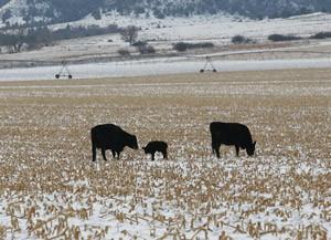 January BeefWatch Webinar Series