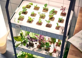 Seven Advices That You Must Listen Before Studying Hydroponic Herb Garden