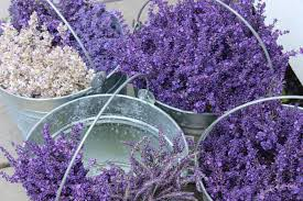 Lavendar Bliss Yin Experience at Katie's Spa