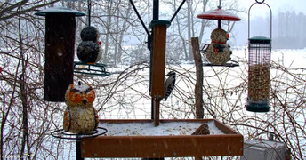 Livestream Birdfeeder Cam