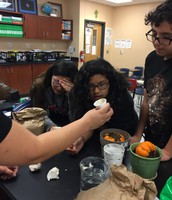 "LMS students investigate geotropism and turgor pressure with ""pumpkin science""."