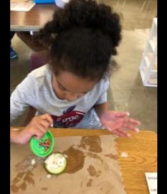 Ms. Carina's Class Exploring Apples