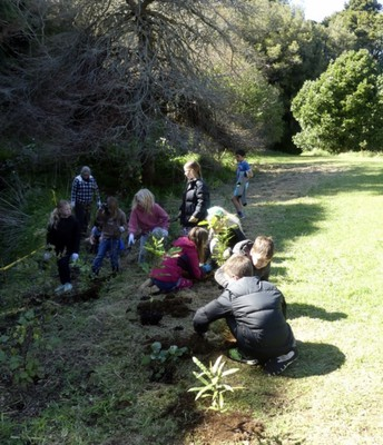 Planting in the Huatoki Domain with Bill