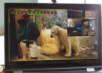 Polar Bear Training