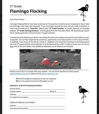 Flamingo Flocking!
