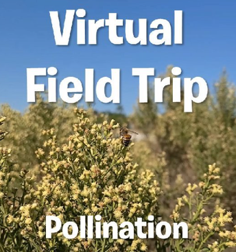 Part 3: How pollinators help people and virtual hike