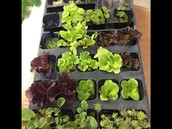 Plants arrived for our One-n-ten Garden Tower!!