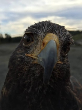 Critter Roundup: Birds of Prey