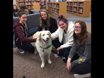 Therapy pets a success over finals!