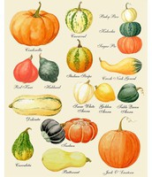 Fall & Winter Squash Varieties