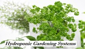 Top Tips For 2012 On Practical Plans For Hydroponic Gardening Systems