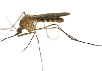 West Nile Virus reported in Dallas County
