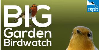 RSPB Bird Watch