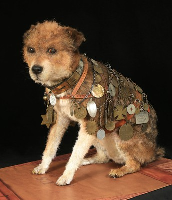 Owney: The Mail Pouch Pooch (All grades)