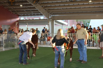 students compete in livestock show