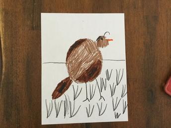 "Kindergarten Learns Letter ""Q"" and ""V"", Kai's Quail"
