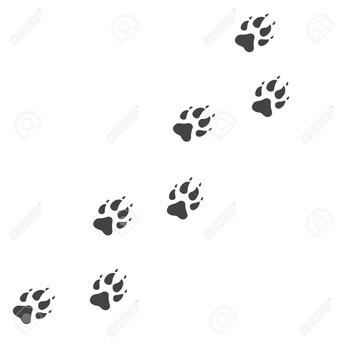 Wolf Tracks ~ Upcoming Events