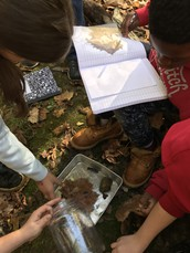 "Fifth Graders are on ""Safari"" at Spruce Run:  Using Trail Cameras for Data Collection"