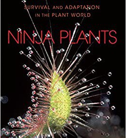 Ninja Plants