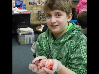 5th graders learn all about the heart and lungs!