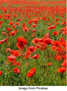 WWI: Poetry & History