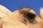 Long Eyelashes and Bushy Eyebrows