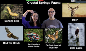 Crystal Springs Fauna