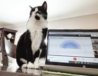 Ms. Reid's cat on Google Meet