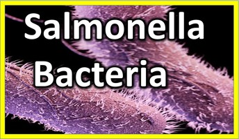 What is Salmonella?