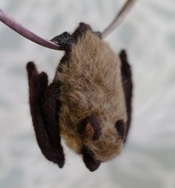 Bats are not to blame for coronavirus. Humans are.