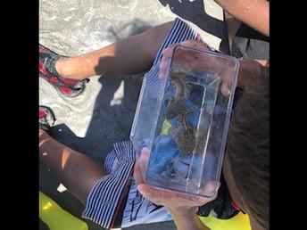 2nd Grade Seagrass Adventure