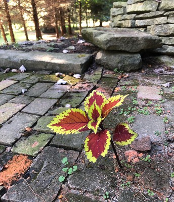 Flowers blossoming through stone!