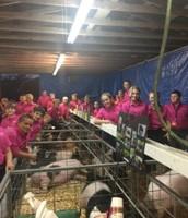 Walton County Fair FFA Hog Show