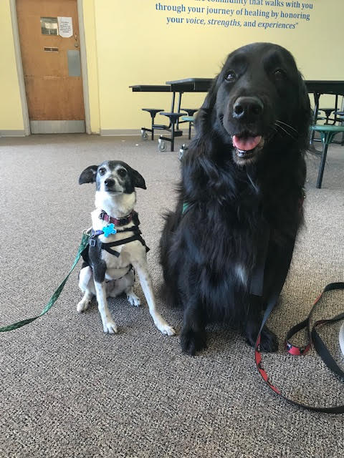 Two Therapy Dogs for Greene!