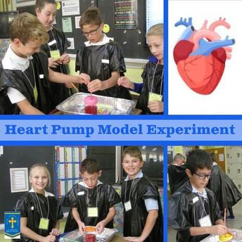 Pumping Heart Experiment