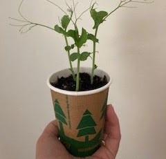 Garden Education Newsletter