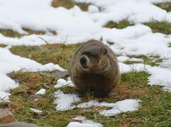 February 2, 2021 - Groundhog Day
