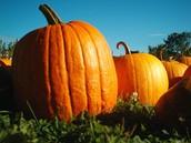 Pumpkins & Prizes
