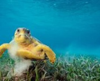 National Geographic Live: Ocean Soul - March 29