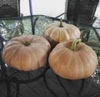 Heirloom Pumpkins & Butternut Squash